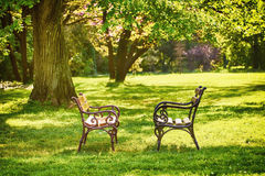 hösten benches parklandskap Arkivfoton