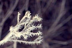 Hösten förgrena sig med hoarfrost Royaltyfri Bild