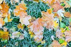 Hösten lämnar Arkivfoton