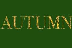 höstgruppen colours tysk yellow för rhine flodtree Arkivfoton