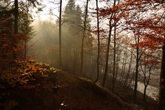 Höstlandskap i bergskog Arkivbild
