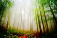 Höstlandskap i skogen Arkivbild