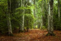 Höstlandskap i skogen Arkivbilder