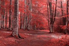 Höstlandskap i skogen Arkivfoton
