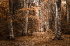 Höstlandskap i skogen Fotografering för Bildbyråer