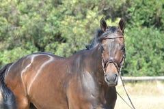 Hästlantgård, trevliga rena häststall Royaltyfri Foto