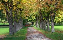 Höstlig kastanjebrun gränd i parkera Royaltyfri Bild