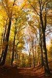höstlig skog Royaltyfri Foto