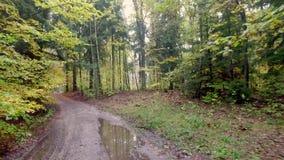 Höstrainforest med guld- sidor i Polen lager videofilmer