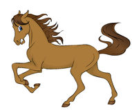 hästruninng Royaltyfria Bilder