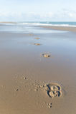 Hästsko på stranden Royaltyfria Bilder