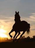 hästsolnedgång Royaltyfri Fotografi