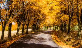 Höstträd near vägen Royaltyfria Bilder