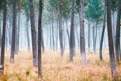 hösttrees Arkivbild