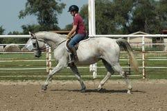 hästutbildning Royaltyfria Foton