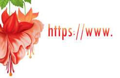 Http / / www.Flowers Royalty Free Stock Photography