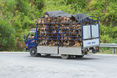 HU�, VIETNAM - AUG 4: Trailer filled with live dogs destined fo Stock Photos