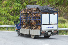 HU�, VIETNAM - AUG 4: Trailer filled with live dogs destined fo Royalty Free Stock Photo