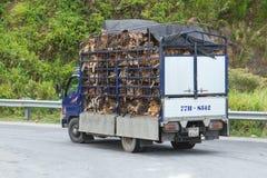 HUÉ, VIETNAM - 4 DE AGOSTO: Remolque llenado de los perros vivos FO destinadas Foto de archivo libre de regalías