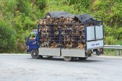 HUÉ, VIETNAME - 4 DE AGOSTO: Reboque enchido com os cães vivos FO destinadas Fotos de Stock