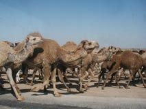 Huéspedes del convoy Fotos de archivo