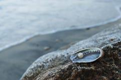 Huître de perle et perle sur le littoral de mer Image stock