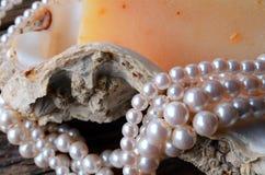 Huître Shell et collier de perle Image stock