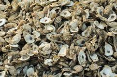 Huître Shell Pile Images libres de droits