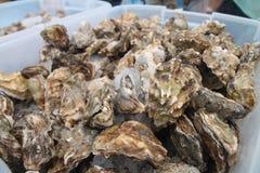 Huîtres à un marché d'agriculteurs Images stock