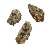 Huîtres. Image stock