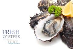huîtres image stock