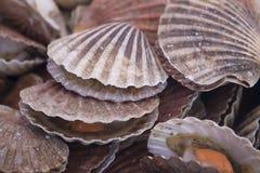 Huîtres au marché de poissons Photographie stock libre de droits