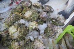 Huîtres - Austern Images libres de droits