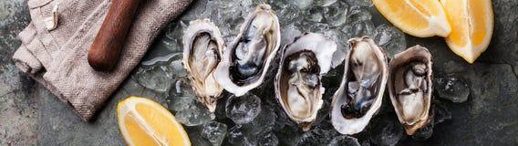 Huîtres avec de la glace et le citron Image libre de droits