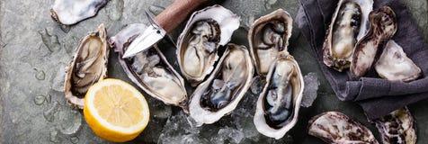 Huîtres avec de la glace et le citron Photo libre de droits