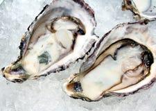 Huîtres crues au-dessus de glace Image stock