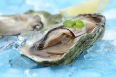 Huîtres crues fraîches avec le jus de citron Photo libre de droits