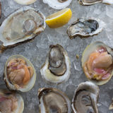 Huîtres crues fraîches sur la glace images libres de droits