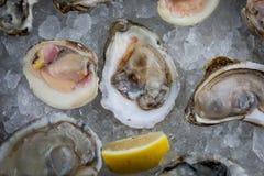 Huîtres crues fraîches sur la glace photo stock