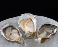 Huîtres d'une plaque avec de la glace Image libre de droits