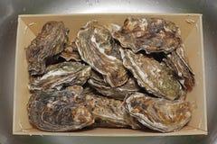 Huîtres dans la caisse Photo libre de droits