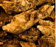 Huîtres dans la coquille illustrée Image stock