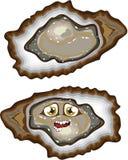Huîtres de vecteur Photo stock