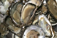 Huîtres, fin vers le haut image libre de droits