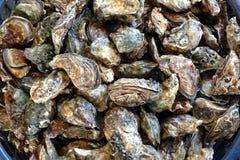Huîtres fraîches à vendre image stock
