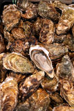 Huîtres fraîches photo stock
