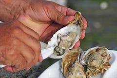 Huîtres fraîches Image stock