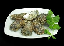 Huîtres fraîches Photographie stock