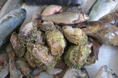 Huîtres fraîches Photos stock