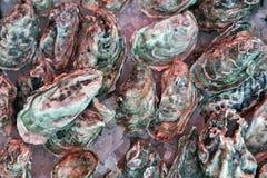Huîtres fraîches sur la glace Image libre de droits
